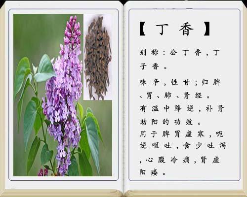 丁香在《全国中草药汇编》中别称:公丁香(花蕾),母丁香(果实).